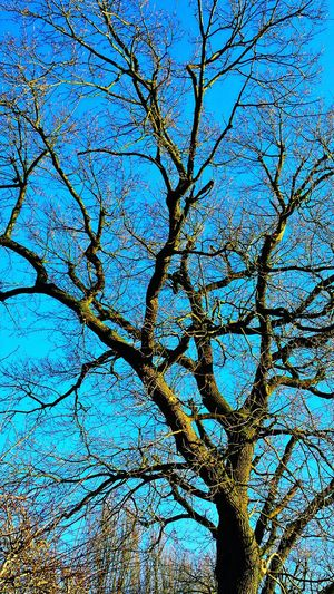 Blue Sky Sky And Trees TreePorn Tree_collection  Treeoftheday Trees And Sky Tree Skylovers Skyporn Nature Photography Nature_collection Naturelovers Nature Nature_collection Landscape_collection EyeEmNatureLover EyeEm Nature Lover EyeEm Best Shots - Flowers EyeEm Best Shots - Nature Eyem Best Shots Nature_collection EyeEm Best Shots - Trees Pictureoftheday EyeEm Best Shots PhonePhotography Eyeemphotography Picofthemoment EyeEmBestPics
