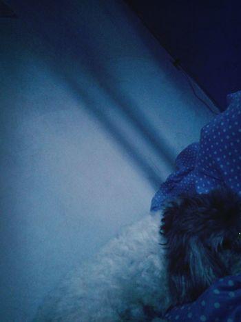 Sleeping My Hayley