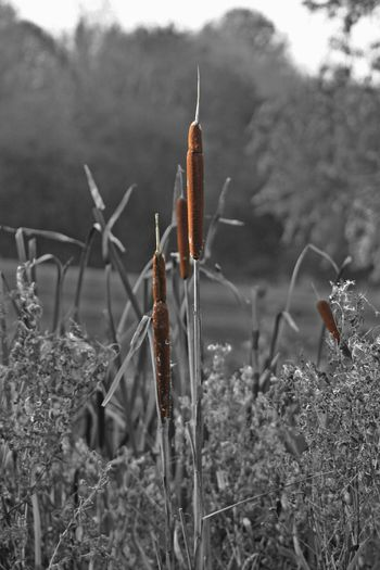 Beyond the bulrushes. EyeEm Nature Lover EyeEm Best Shots EyeEm Best Shots - Nature Nature On Your Doorstep EyeEm Best Edits EyeEm Masterclass EyeEmBestPics