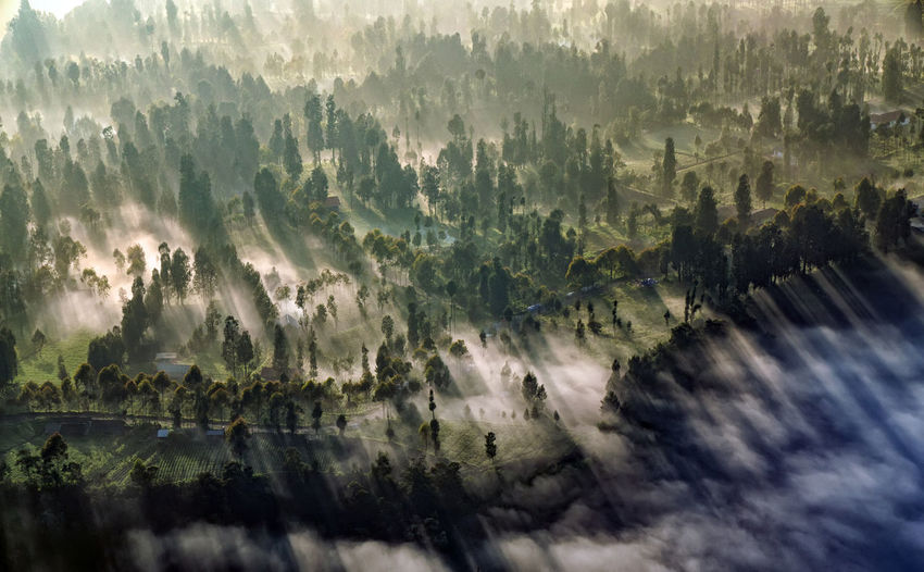 Aerial view of forest during foggy weather