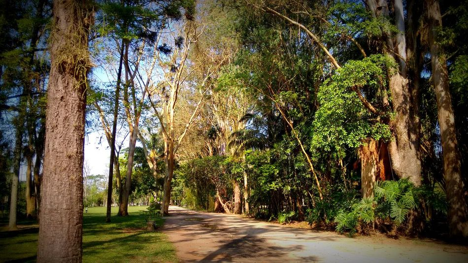 Park Brazil Beauty In Nature Tranquility Day Road No People Nature America Nature_collection Natural Beauty