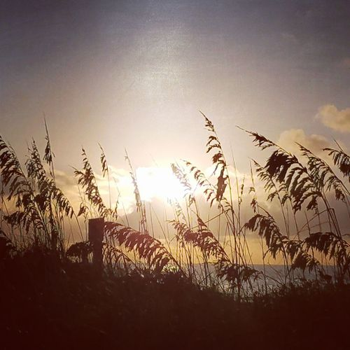 Sunrise thru the sea oats!