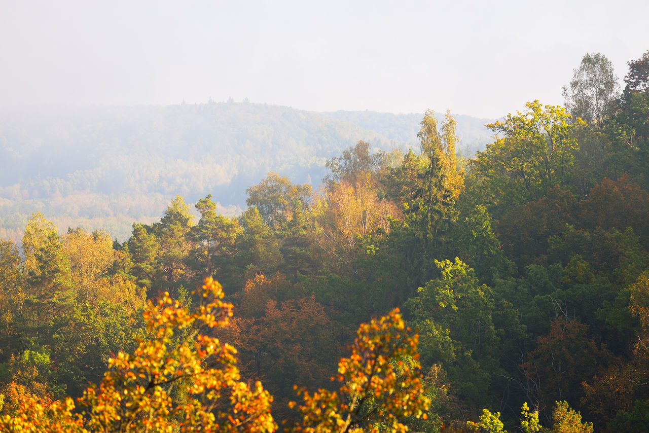 TREES AND PLANTS DURING AUTUMN