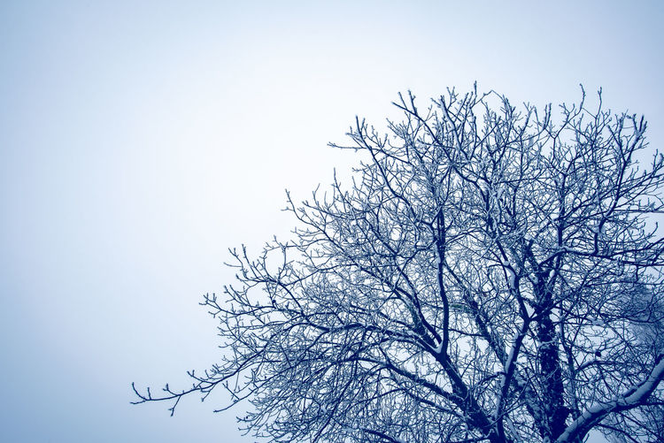 Tree Plant Tranquility Sky Beauty In Nature Scenics - Nature Branch Tranquil Scene Bare Tree Nature No People Day Outdoors Winter Snow Snowy Blue Copy Space