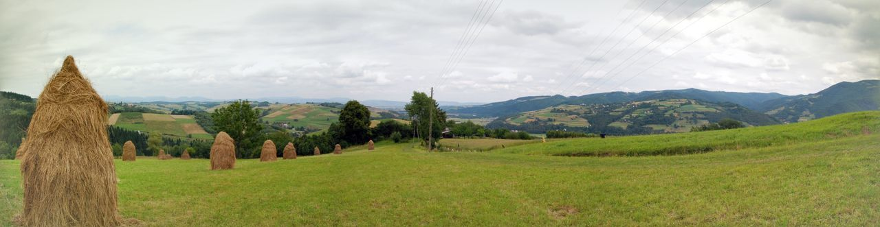 Panoramic view of trees on field against sky