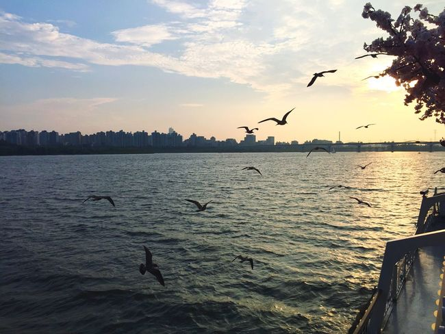 Bird Flying Nature Water Sea And Sky Sea Beauty In Nature Sky Flock Of Birds Spread Wings Seoul, Korea Han River Seoul Hanriver Korea Korean July 2016 Traveling In Korea Han River Park Han River Bridge