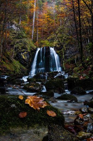 Colors Fall Water Tree Plant Forest Beauty In Nature Scenics - Nature Flowing Water Waterfall Motion Nature Long Exposure No People Land Flowing Growth Day Blurred Motion Non-urban Scene Environment Outdoors