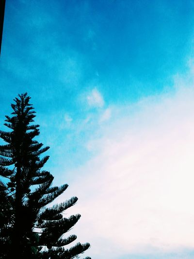 Beautiful VSCO Life Happy Street Photography Photography Classic Silhouette Vscocam Streetphoto POTD Street Art OpenEdit Streetphotography Street Nature Trees