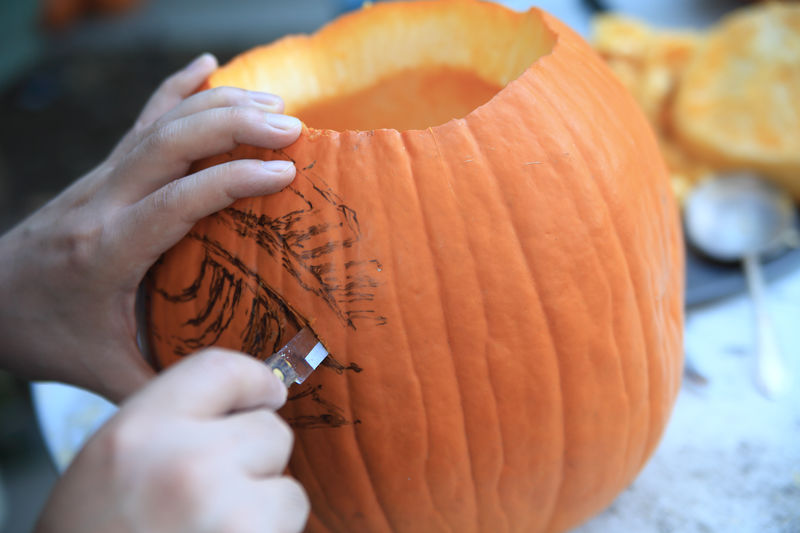 Man uses a paring knife on Halloween pumpkin American Culture Autumn Carving Close-up Craft Drawing Fall Fingers Fun Halloween Hands Holding Holiday Tradition Jack O' Lantern Leisure Activity Man October One Person Outdoors Pumpkin Sketch Skill  Using Tool Vegetable