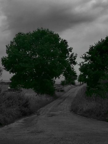 Beauty In Nature Cloud - Sky Country Road Day Diminishing Perspective Dirt Road Growth Landscape Nature Non-urban Scene Outdoors Plant Road Scenics Sky The Way Forward Tranquil Scene Tranquility Tree Vanishing Point