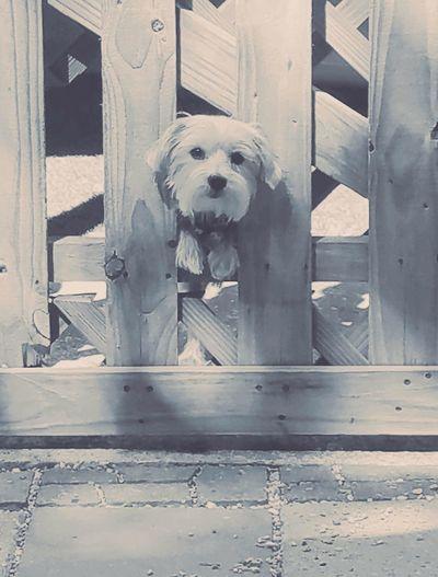 DogLove Dog❤ Dogs Of EyeEm Dog Photography One Animal No People Animal Themes Louisiana Dogs Dog Lover Dog Life Dogmodel Dog Days Eye Of Ky