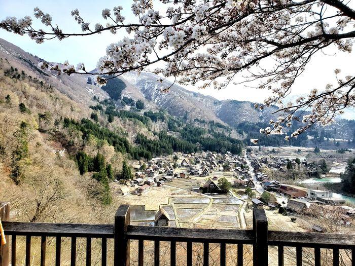 Sakura 櫻花 白川鄉 合掌村 Tree Mountain Water Sky