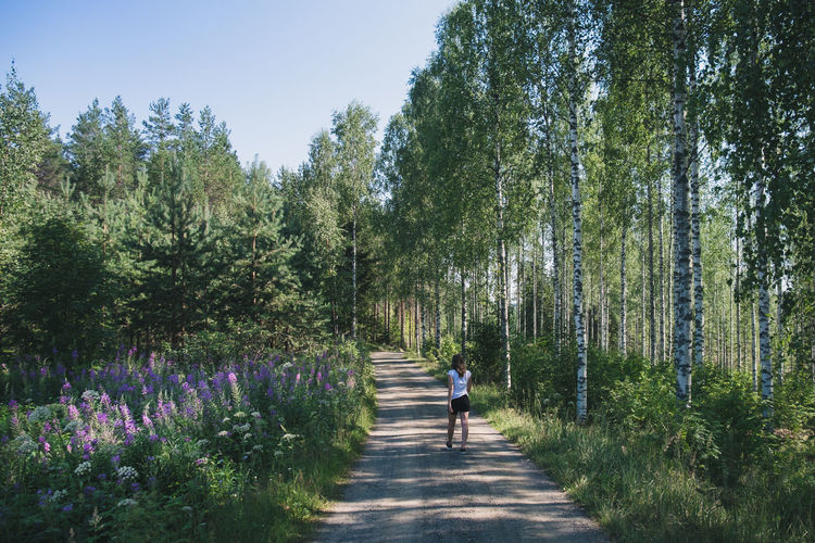 Birch wood and wild flowers in the finnish countryside