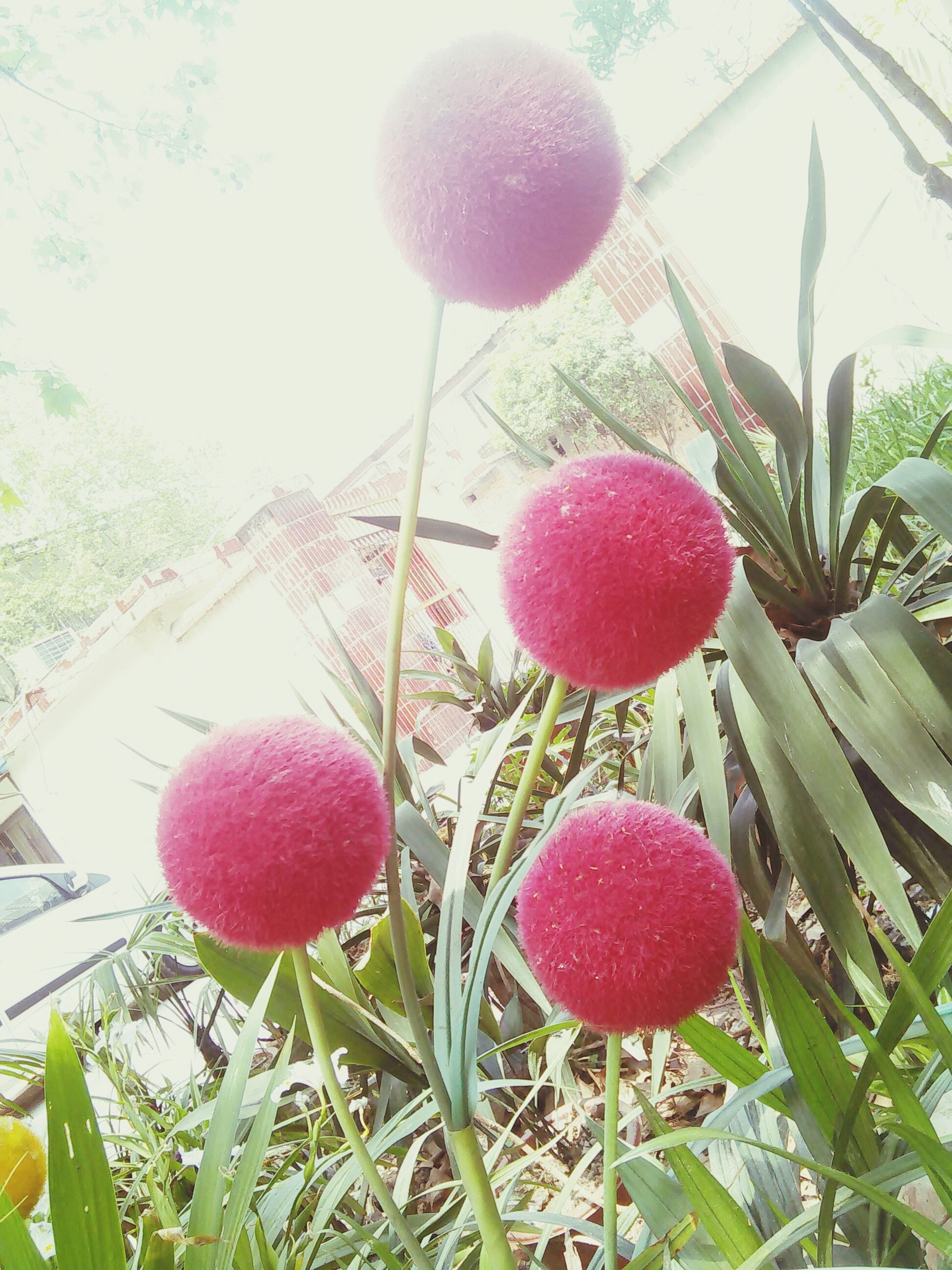 fruit, food and drink, freshness, growth, red, food, tree, close-up, hanging, healthy eating, ripe, leaf, plant, nature, growing, branch, berry fruit, day, no people, stem