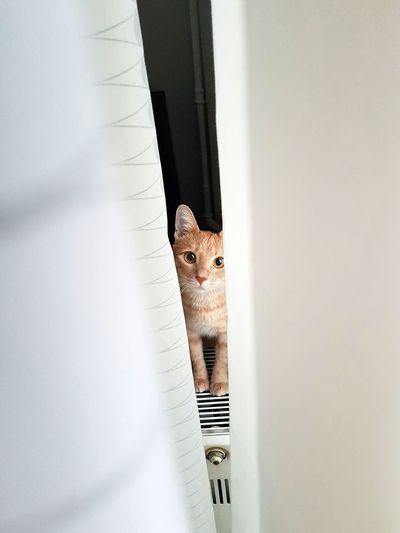 Peekaboo! Cat♡ Catlover Cats Of EyeEm Hello World ✌