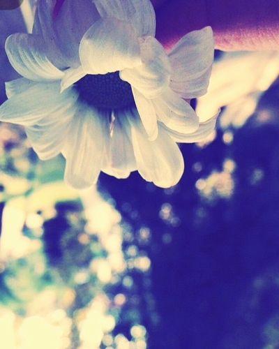 Flowers Hanging Out Enjoying Life Hello World Smile ✌ Muhterika
