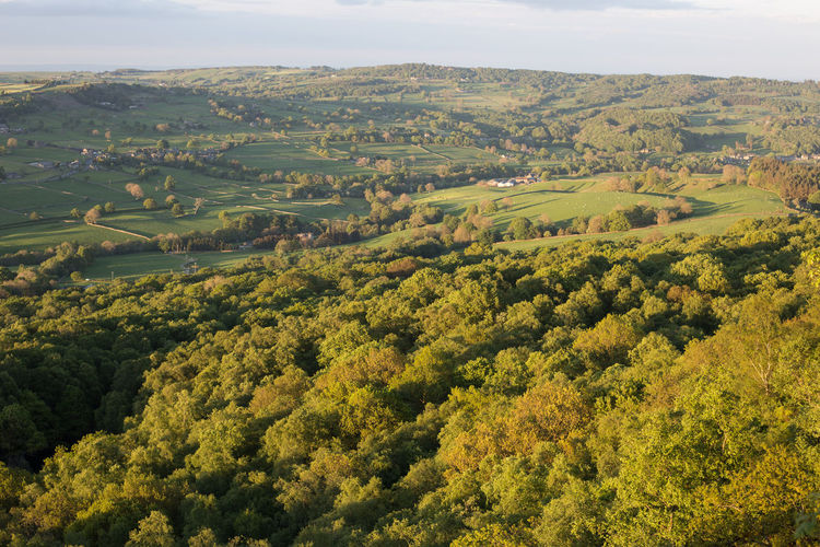 Evening view over Nidderdale, North Yorkshire from Guisecliff Woods near Pateley Bridge Tree Landscape Scenics - Nature Plant Environment Beauty In Nature Tranquil Scene Tranquility Growth Green Color Day No People Nature Sky Land Idyllic High Angle View Non-urban Scene Outdoors Field Rolling Landscape Evening Light Evening Guisecliff Woods North Yorkshire Nidderdale. Shadows Trees Woods Rural Landscape Fileds Patterns In Nature Spring Springtime