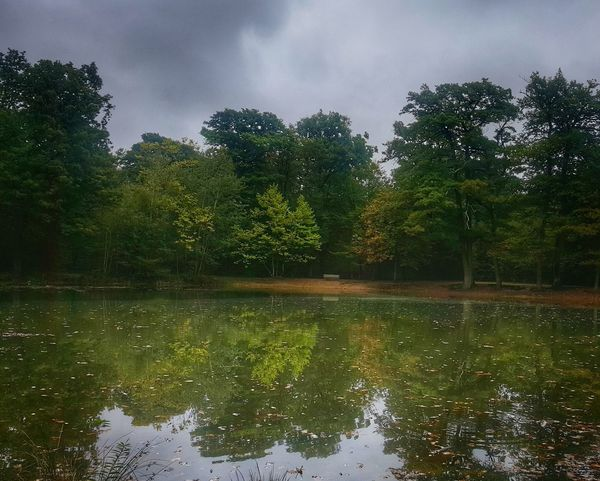 Mirrorpond in Forest during Autumn
