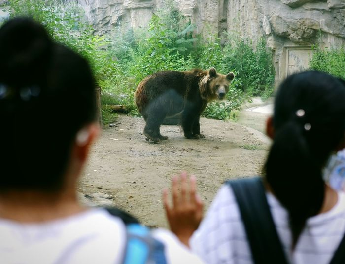 Zoo Bear Animal Caged Freedom Limited Communicate One Animal People Outdoors