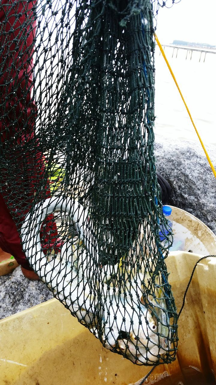 fishing net, no people, day, close-up, tree trunk, outdoors, tree, cold temperature, nature, animal themes