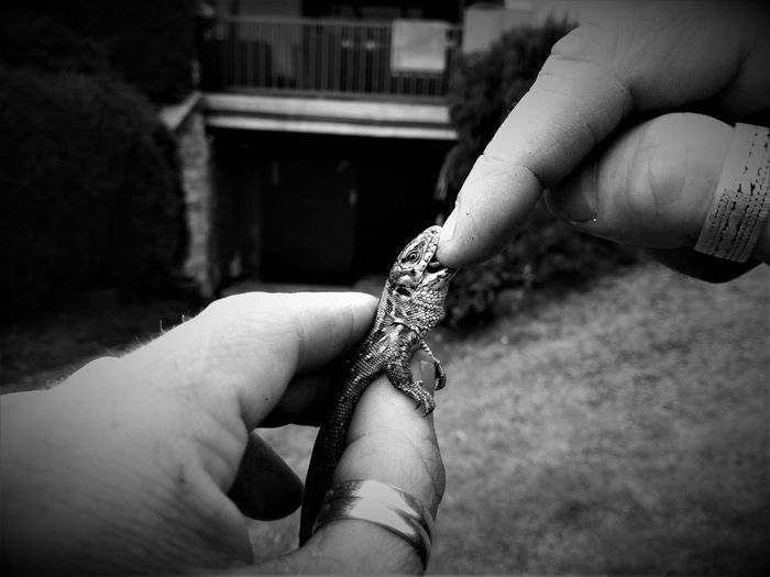 Lizard Body Part Close-up Day Finger Focus On Foreground Hand Holding Human Body Part Human Finger Human Hand Lifestyles One Animal One Person Outdoors Personal Perspective Real People Unrecognizable Person