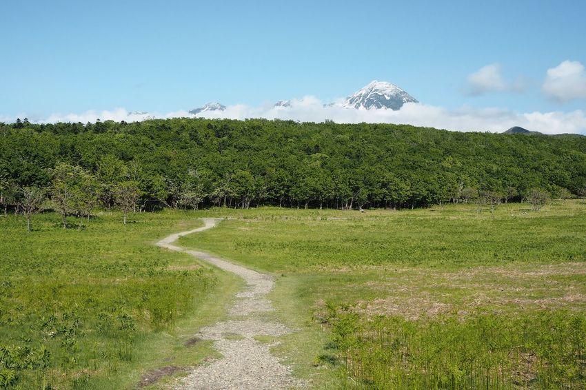 The greens of spring Utoro Hokkaido Japan Nature Mountain Green Walking Trail Stroll Furepe Waterfall Natural Heritage