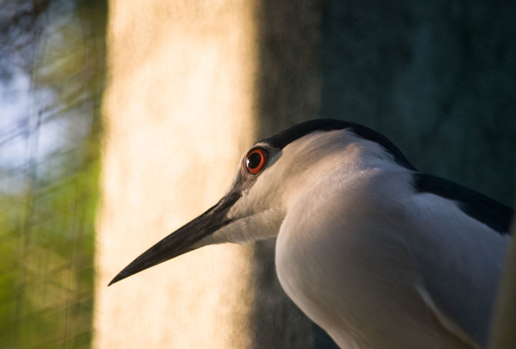 Low angle view of black crowned night heron