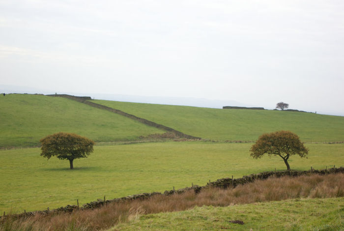 Landscape Grass Agriculture Nature Field Green Color No People Beauty In Nature Tree Sky Outdoors Tranquil Scene Rural Scene Scenics Day English Countryside Tranquility Trees 3 Trees Three Trees