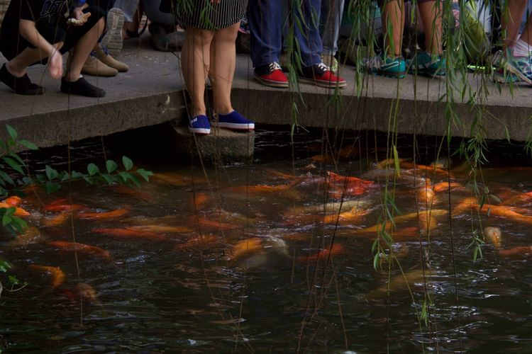 Low section of people standing by koi carps swimming in pond