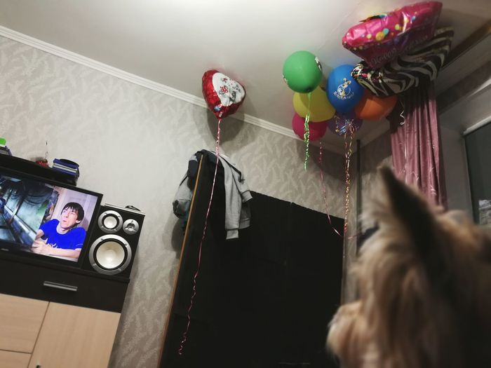 after party Dog Unfocused Balloons Bday After Part EyeEm Selects Indoors  Only Women One Woman Only One Person Variation Multi Colored Adult People Adults Only One Young Woman Only Young Adult Day