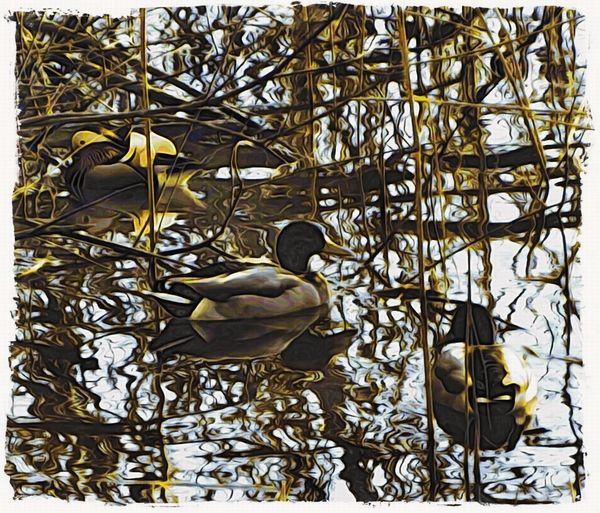 Japanese woodcut effect Moku Hanga Jixipix Ducks In The Reeds Lake Sunshine Winter Water Waterfowl Bird Animals In The Wild Animal Wildlife Animal Themes Day Nature No People