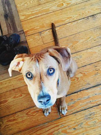 Puppy eyes Dog Pets Domestic Animals Mammal Portrait