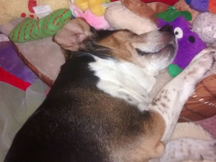 Capture The Moment as dreams of sqweaky toys danced in his head...
