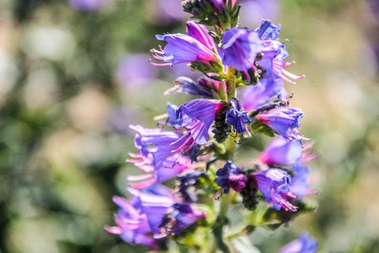 Flora Flor Pozo