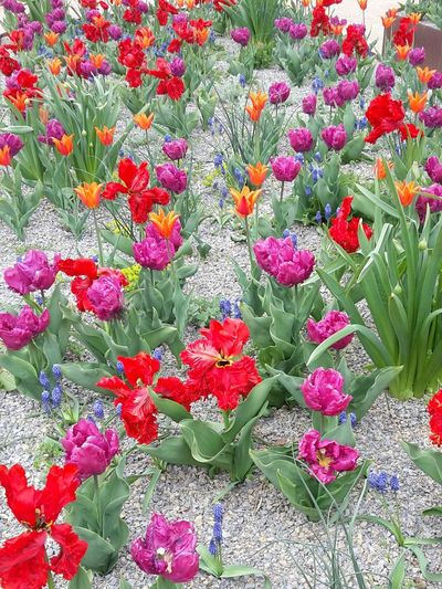 Enjoying Life Flower Collection Flowerpower EyeEm Nature Lover Spring Flowers Flowers Flower