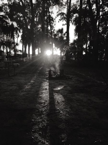 When the sun is going down... Monochrome Sunset Campfire Spanish Moss Swamp Lanscape IPhoneography