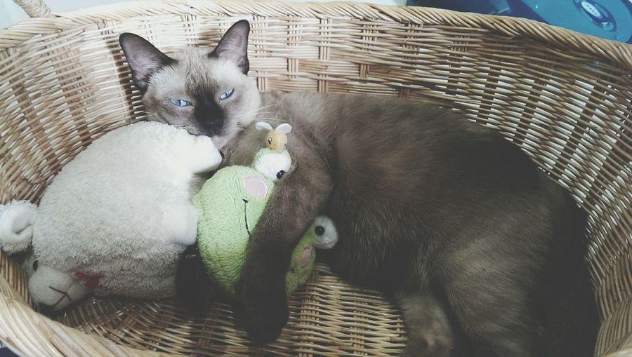 My Unique Style Cat Sleeping