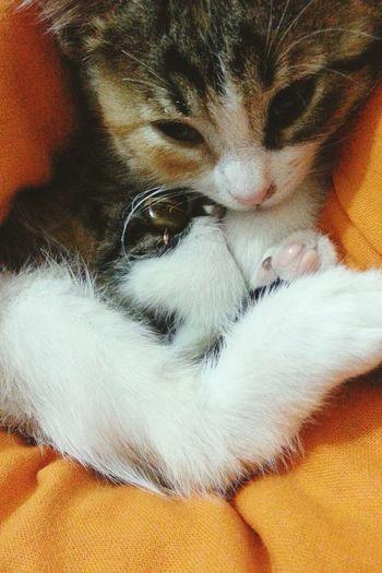 Mycat Cat Ilovecats Pets Cute Pets Petstagram Petlover Pet Mypet Pets Corner