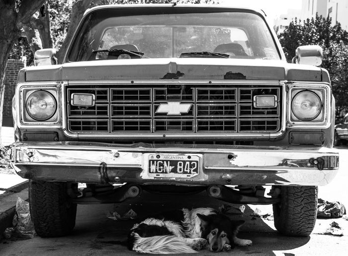 Transportation Car Front View Land Vehicle Old-fashioned Day Outdoors No People Nature Streets Street Life Street Photo Streetphotographer Streetphotography Dog Dogs Dogs Of EyeEm Dogslife Animal Pet Animals Van Chevrolet Pickup Pickup Truck Black And White Friday