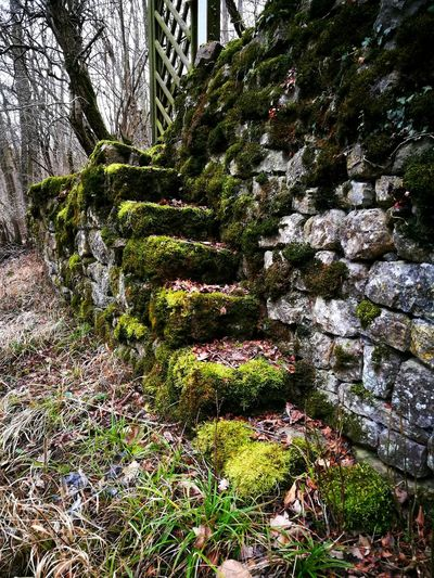 StoneStairs Mosscovered Mosscovered Stairs Nature No People Growth Stairs Weathered Old Moss Stone Stonewall Nature Photography