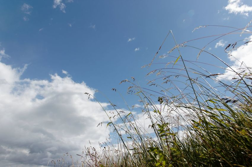 Beauty In Nature Blue Sky Day Flower Grass Growth Nature No People Outdoors Plant Sky