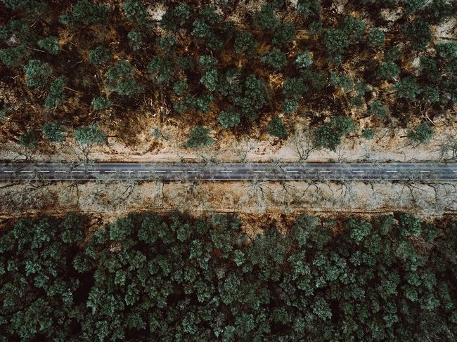- German Road - Flying High Perspective Bird Perspective No People Full Frame Outdoors Nature Day Growth Tree Close-up Backgrounds Ivy Architecture Road Road Germany EyeEm Best Shots EyeEm Best Edits Landscape Forest EyeEm Nature Lover Beauty Nature From Above  Lost In The Landscape