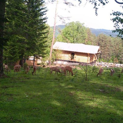 Природа Лес пятнистый олень