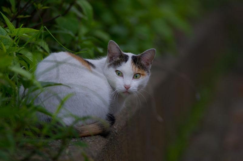a cat with Kabuki face Animal Eye Animal Themes Cat Curious Eyes Kabuki Looking At Camera Mammal One Animal Wild Animal