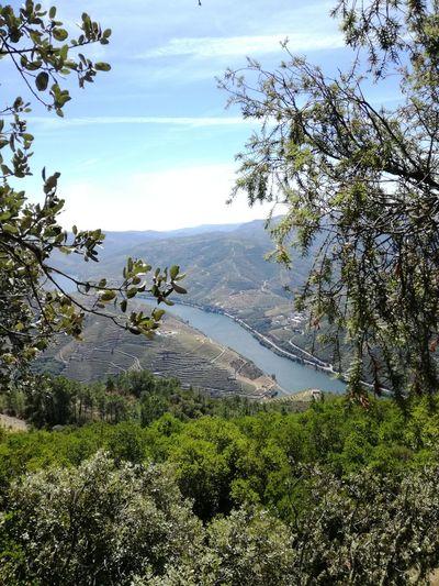 High, so high. #Eyemselected #eyemnaturelover #eyemmarket #summer #Nature  #miradouro #portugal #douroriver #river Water Tree Sky Landscape Tranquility Idyllic Plant Life Remote Non-urban Scene Tranquil Scene Scenics Go Higher