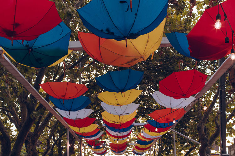 The Street Photographer - 2019 EyeEm Awards Multi Colored Hanging Decoration Tree Blue Nature Low Angle View No People Celebration Plant Day Outdoors Red Variation Shape Choice Lantern Large Group Of Objects Lighting Equipment Ballooning Festival