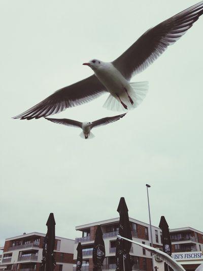 Flying Birds in Wedel Taking Photos