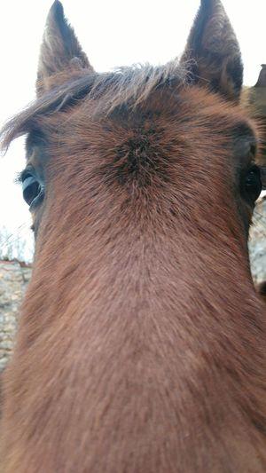 Eyem Best Shots Sony Xperia Horse Young Curiosity Curious Caballo Joven Potro Curioso