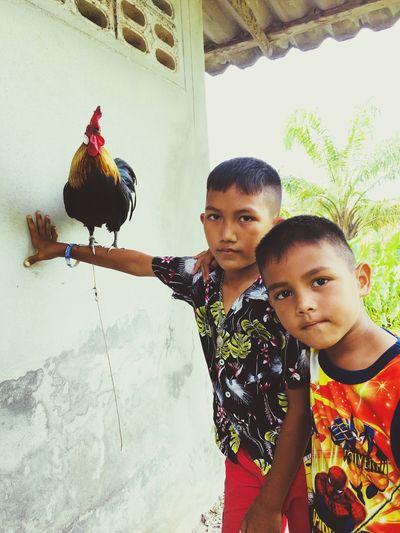 Don't mess it with them 🐓🐓🐓 Children Childhood Chicken - Bird Hill Tribe Thailand