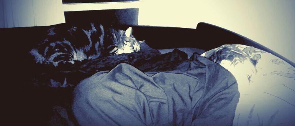 Cat Lovers Cat Pet Photography  Pets Kid Son Boy Sleeping Cat Sleeping Boy Night Photography